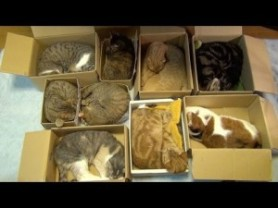 organied kitty boxes